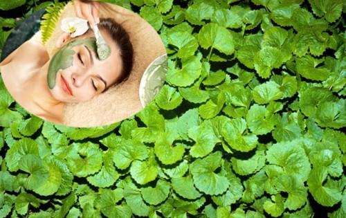 cách trị sẹo lồi tự nhiên bằng rau má